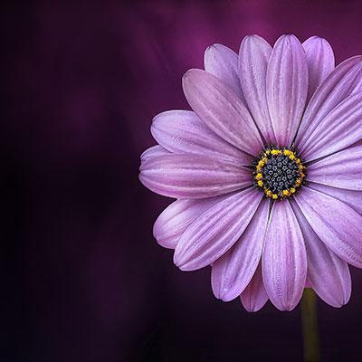 flower-729512_1920_7.jpg