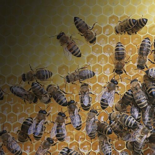 honeycomb-beehive-bees_7.jpg