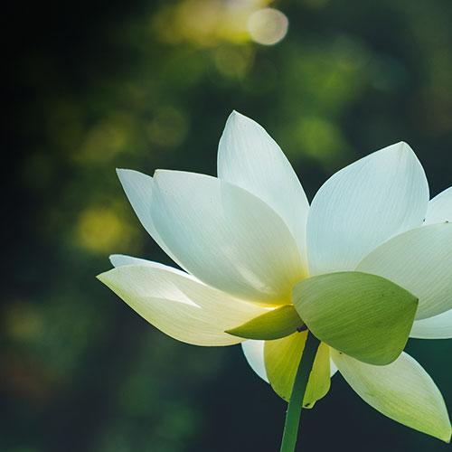 lotus-flower-inspired-by_7.jpg