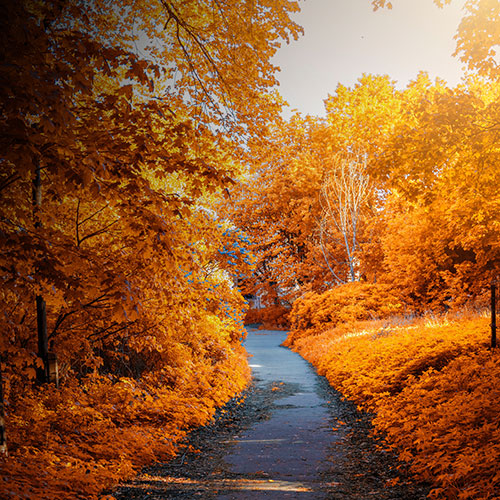 photo-of-path-in-between-woods-during-autumn_7.jpg