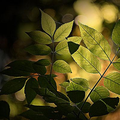 leaf-3939701_1920_7.jpg