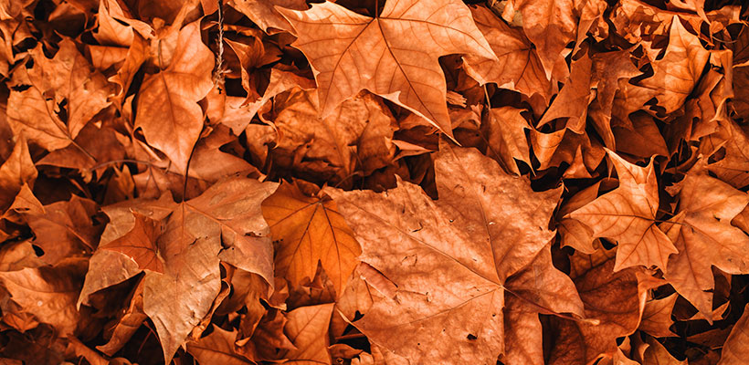 Fallen Leaves on Primrose Hill